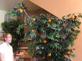 orange_oranges